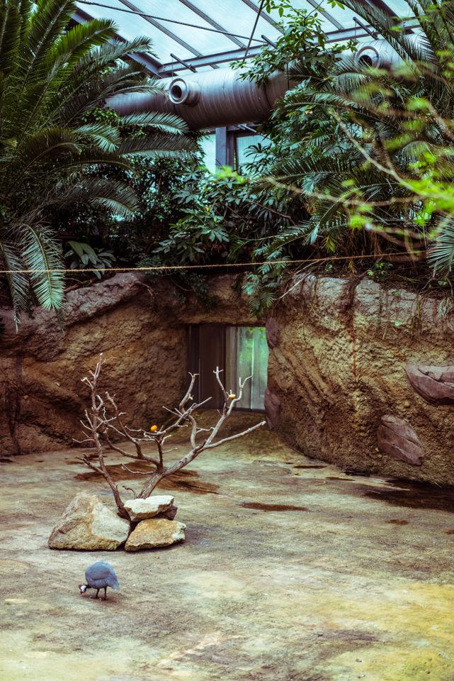 Ein Gehege im Zoo