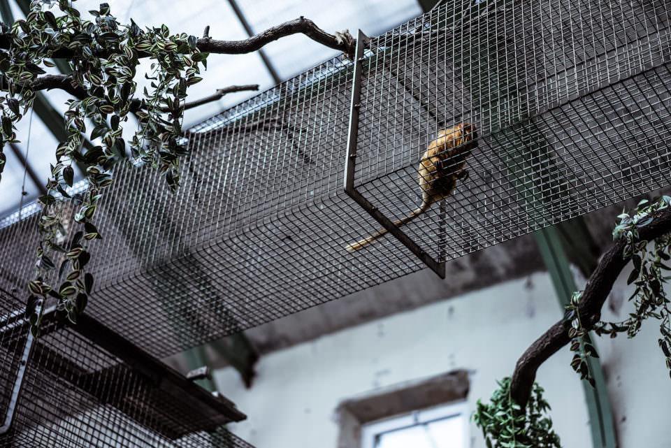 Ein Affe im Zoo