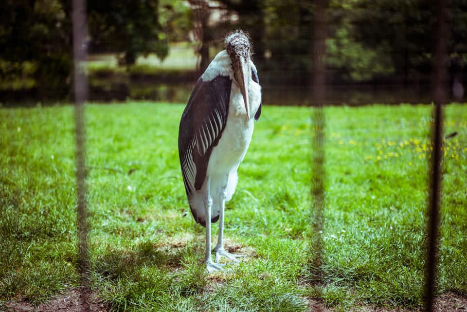 Ein Vogel im Zoo
