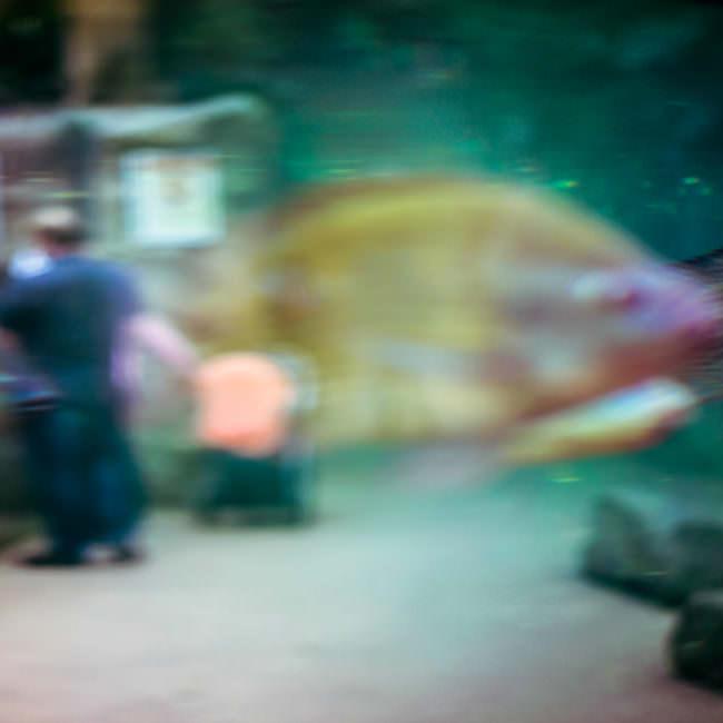 Ein unscharfer Fisch im Aquarium
