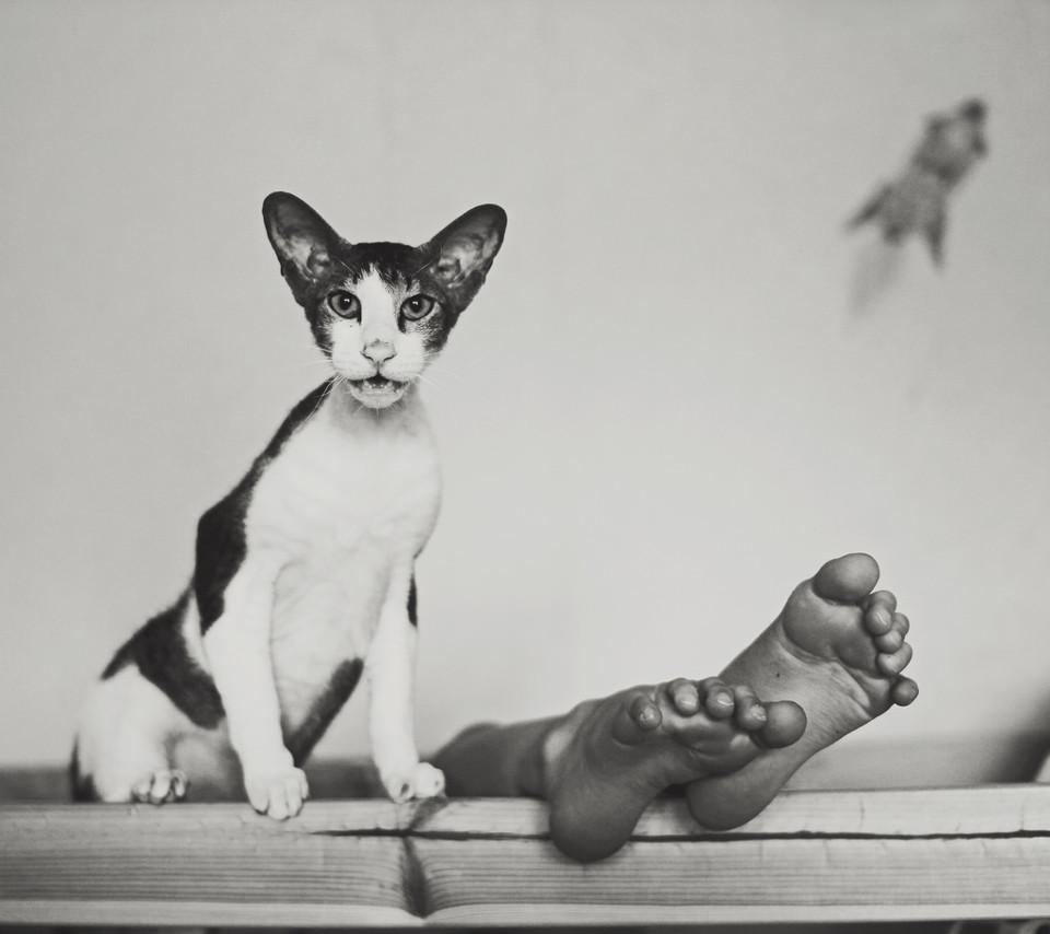 Schwarzweißfoto eines Katze neben Kinderfüßen.