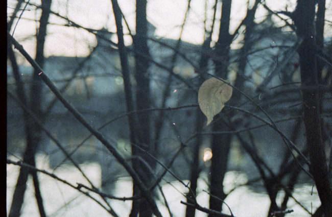 Ein Blatt im Wind an einem Baum.