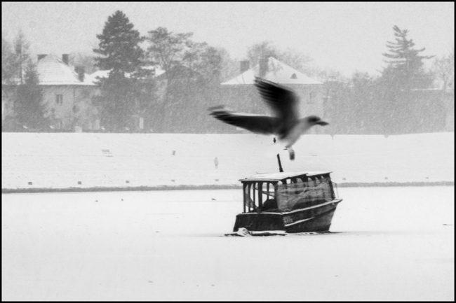 Schwarzweißaufnahme eines Möwe, die über Schnee fliegt.