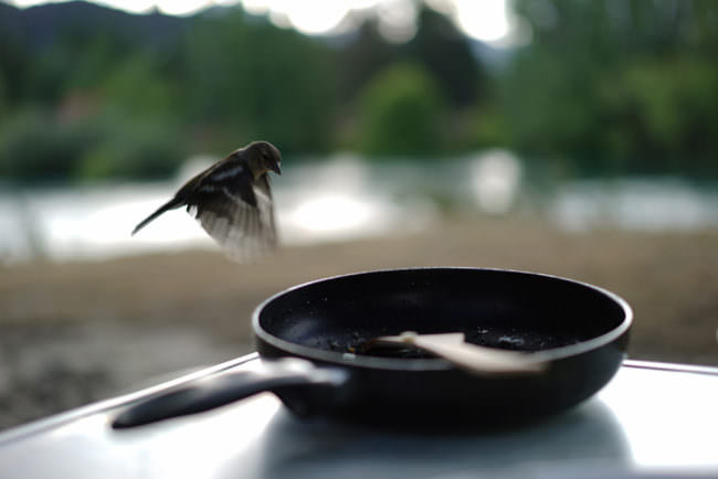 Ein Vogel fluegt über eine Pfanne