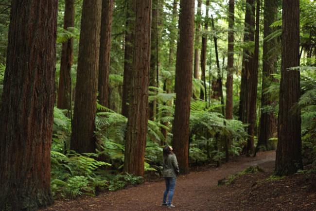 Eine Frau im Wald