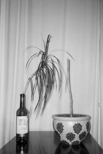 Eine abgeschnittene Pflanze steckt in einer Weinflasche neben ihrem Topf.