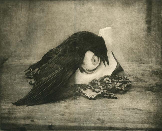 Stillleben mit totem Vogel
