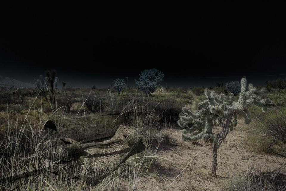 Eine ausgeleuchtete Wüstenlandschaft mit typischer Bewachsung.