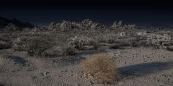 Eine ausgeleuchtete Wüstenlandchaft mit einem Strauch im Vordergrund.