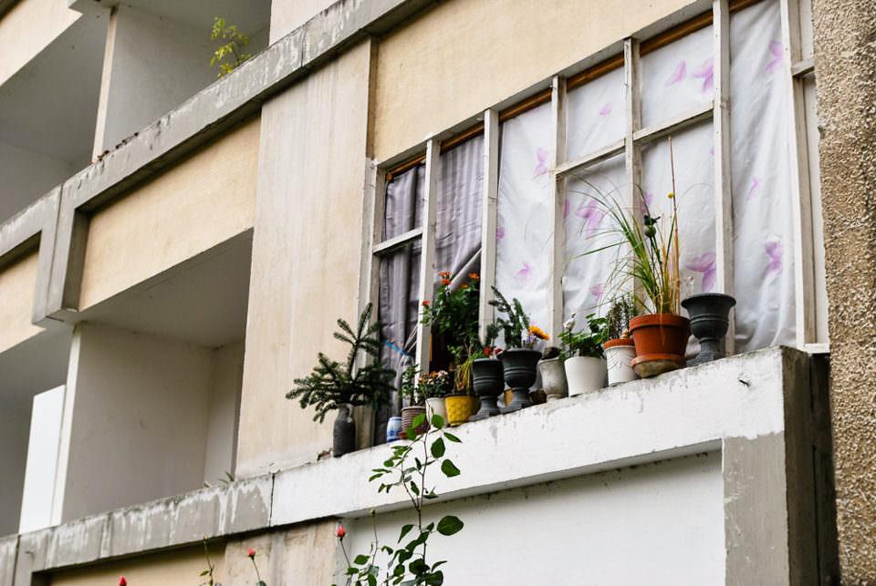 Blumentöpfe vor einem Fenster