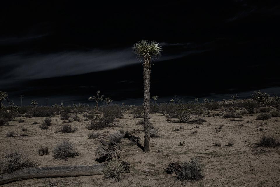 Eine ausgeleuchtete Wüstenlandschaft mit einer großen Palme in der Mitte.