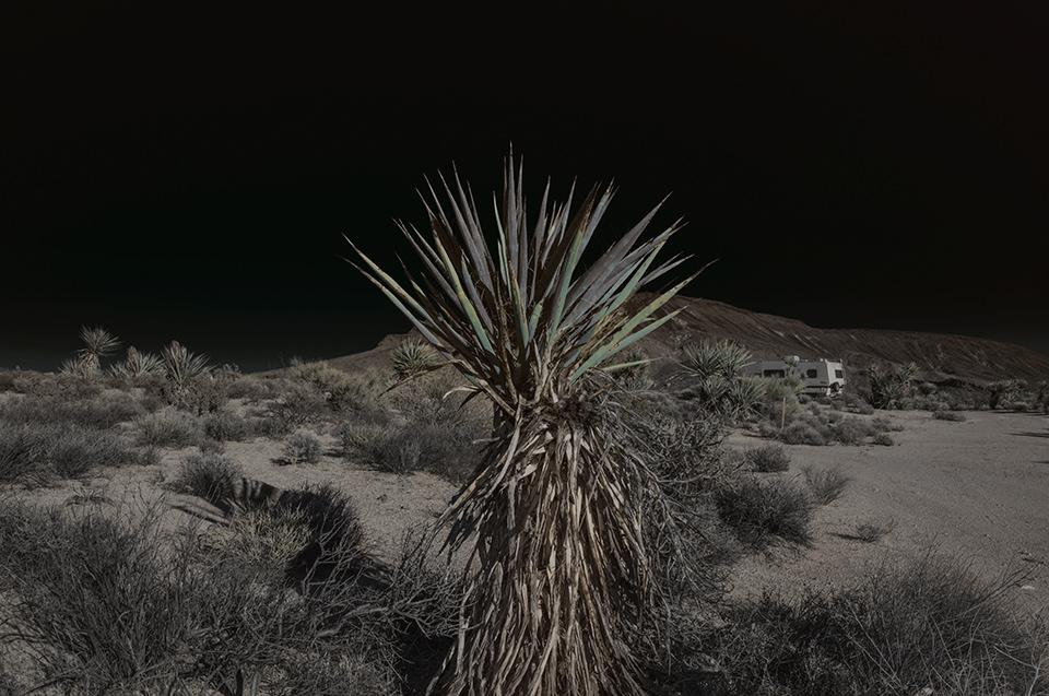 Eine ausgeleuchtete Wüstenlandschaft mit einer Palme im Vordergrund.