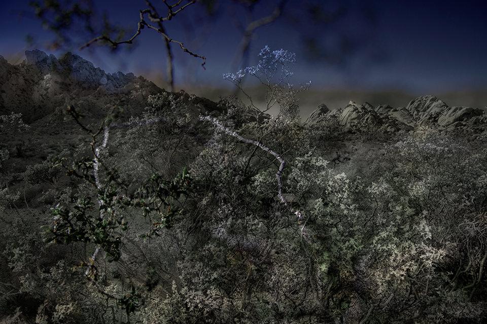 Eine ausgeleuchtete Wüstenlandschaft mit vertrockneten Pflanzen.
