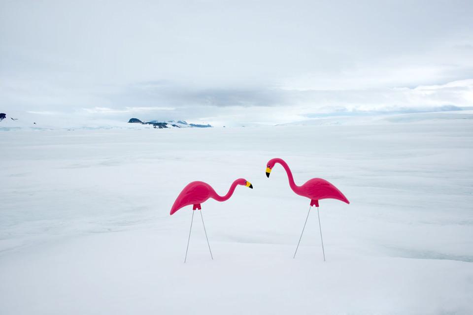 Zwei pinke Plastikflamingos aus weißem Schnee.