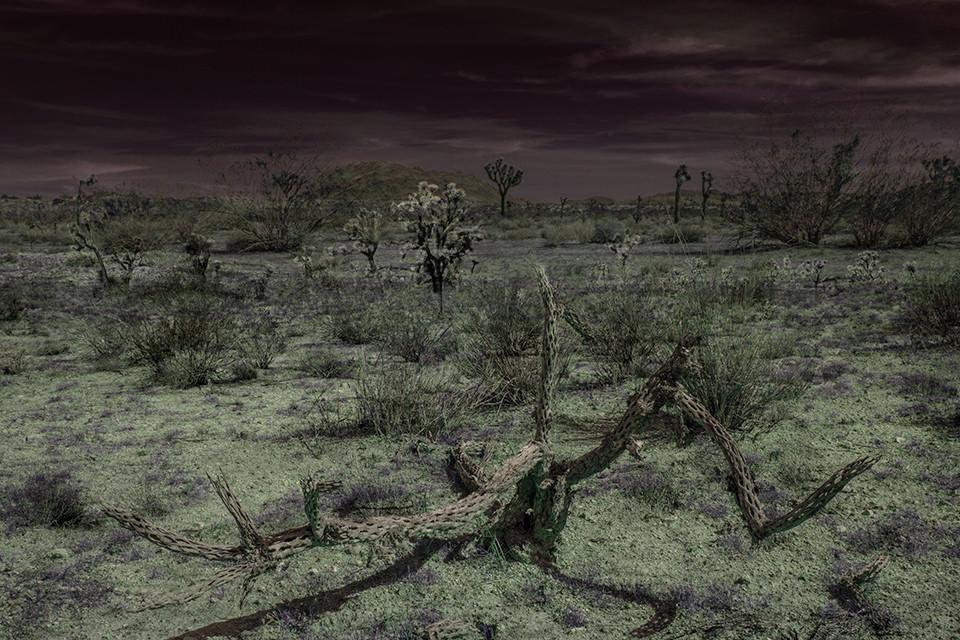 Eine ausgeleuchtete Wüstenlandschaft mit verdorrten Pflanzen.