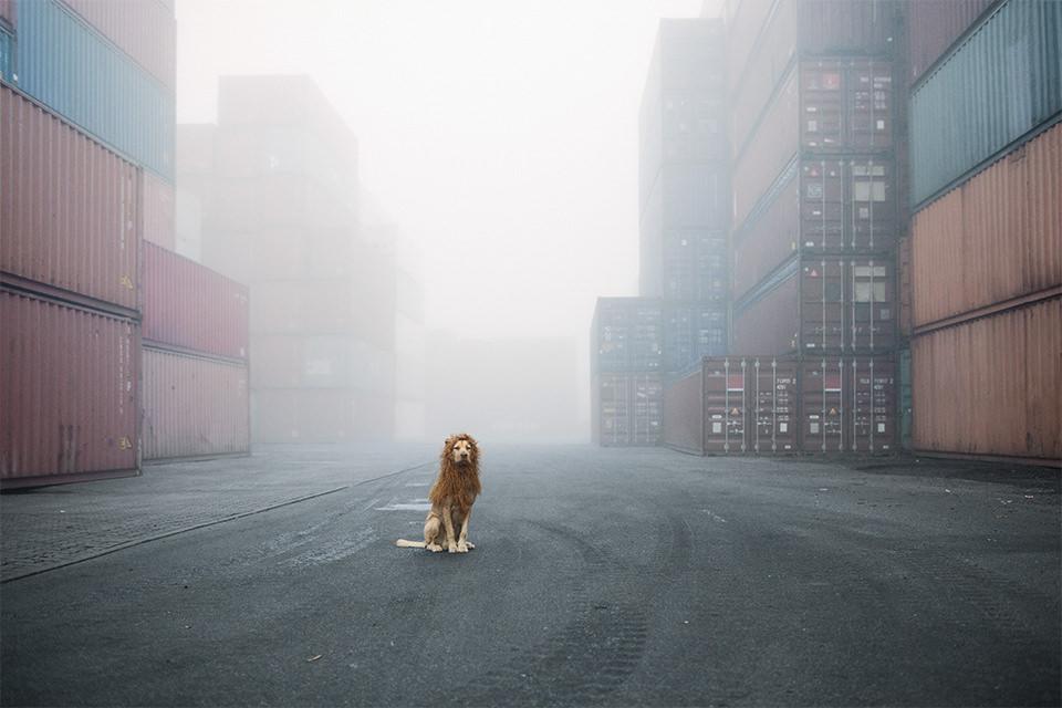 Ein Hund mit einer Löwenmähne im Nebel zwischen Containern