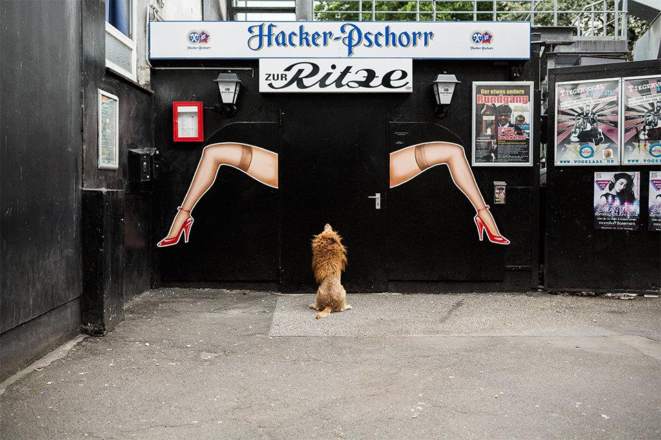 Ein Hund mit einer Löwenmaske sitzt vor einem schwarzen Tor mit aufgemalten Frauenbeinen darauf