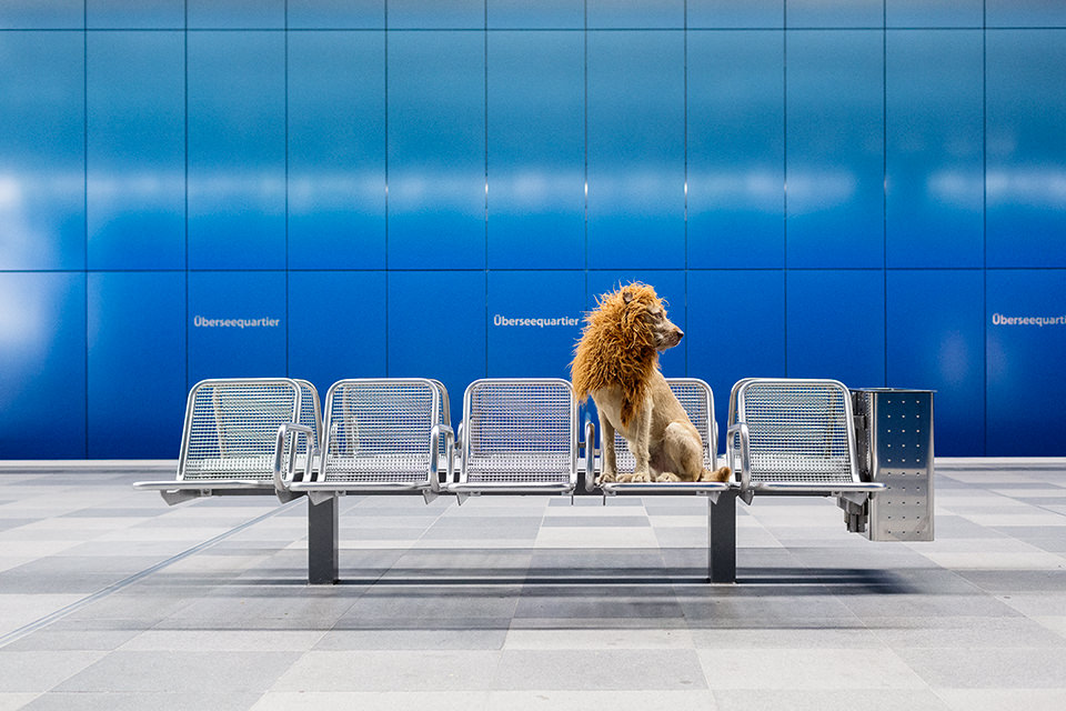 Ein Hund mit einer Löwenmähne sitzt auf einer U-Bahn-Bank