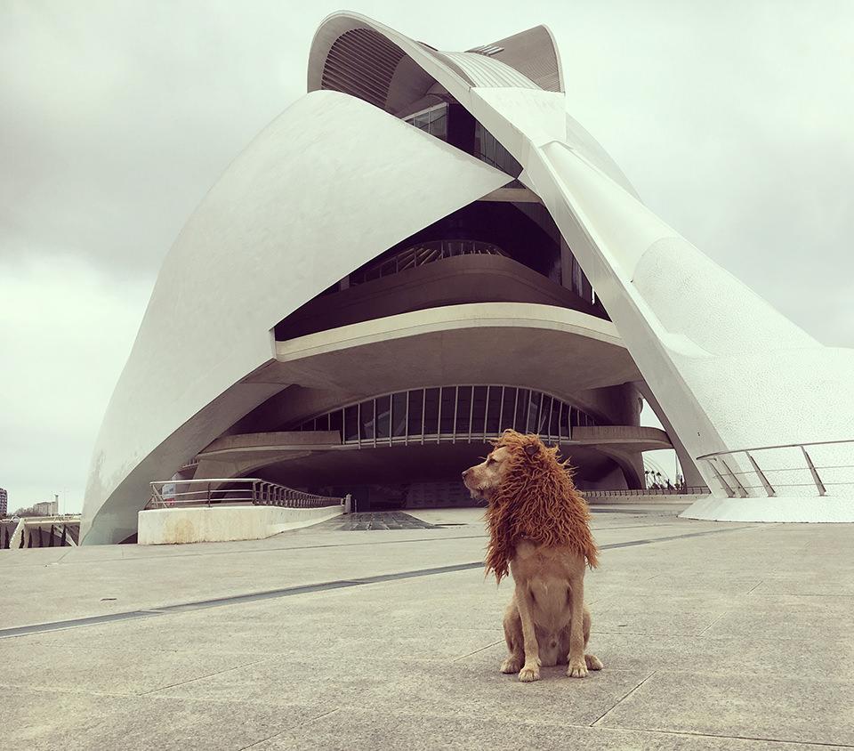 Ein Hund mit einer Löwenmähne vor einem Gebäude in Valencia