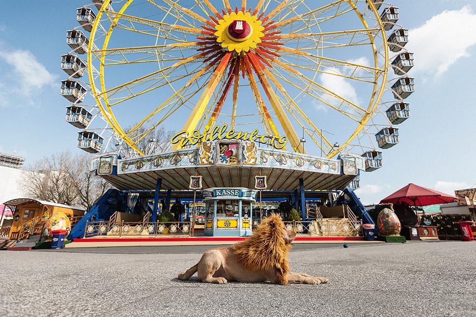 Ein Hund mit einer Löwenmähne sitzt vor einem Riesenrad