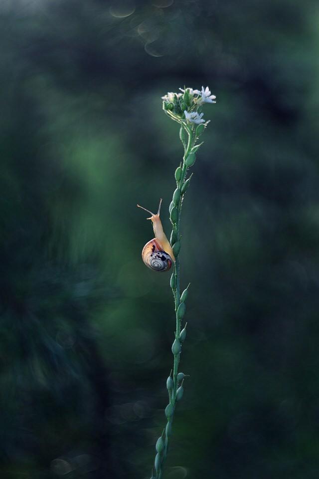 kleine Schnecke auf einer Blume