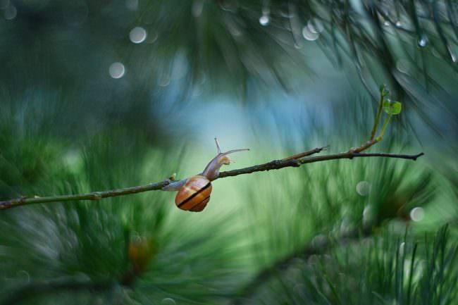 Schnecke auf einem Zweig