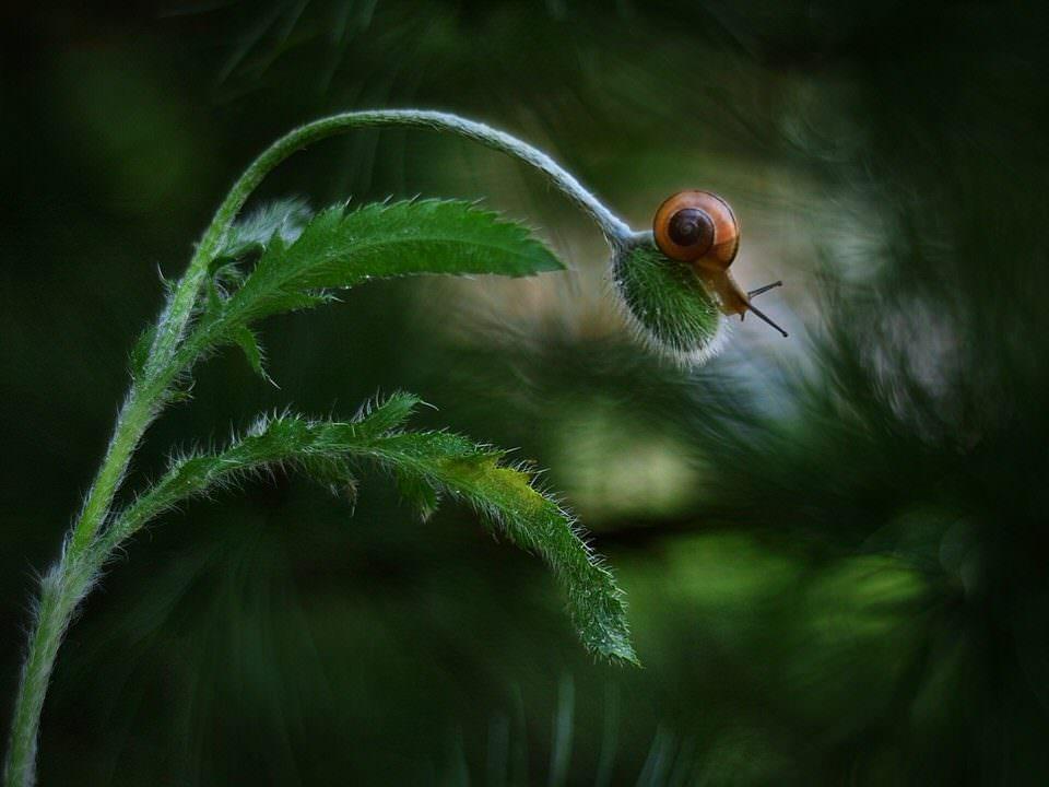 Schnecek auf Blüte