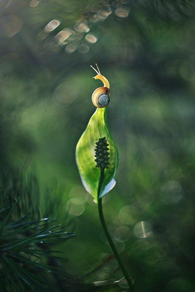 Schnecke auf der Spitze eines Blattes