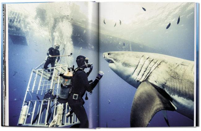Aufnahme zweier Taucher im Angesicht eines Weißen Hais