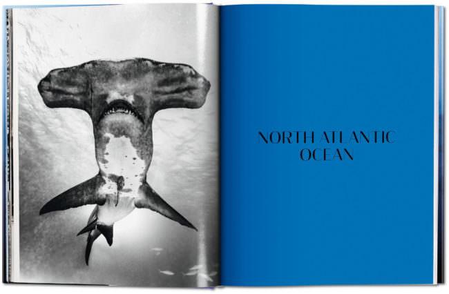 Aufnahme eines Großer Hammerhai und der Buchgliederung