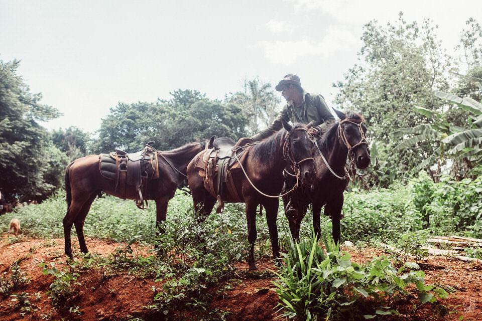Ein Mann mit Pferden