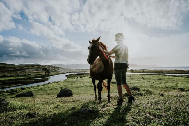 Eine Frau steht neben einem Pferd auf einer grünen weiten Wiese.