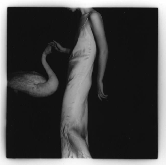Eine Frau in weißem Kleid strechelt einen weißen Schwan vor ihr über den Kopf.