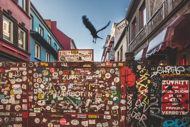 Ein Vogel fliegt über eine Mauer