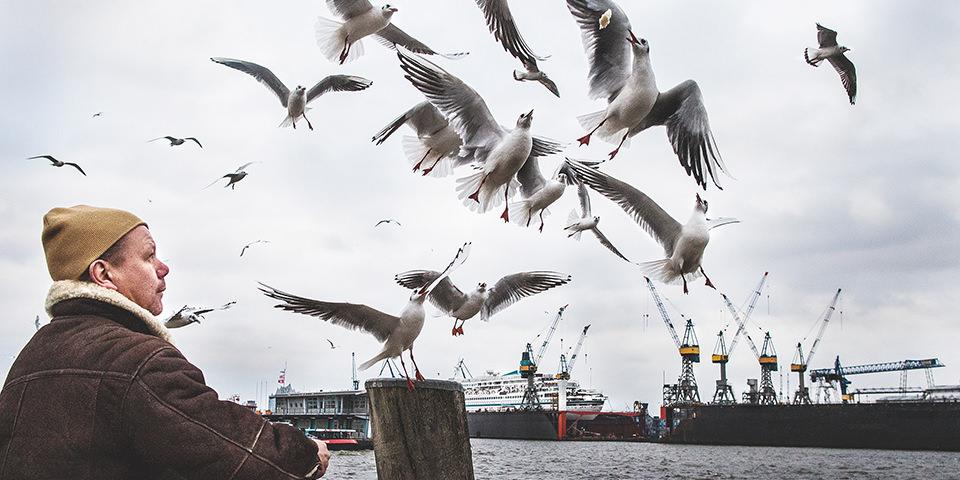 Möwen am Hafen
