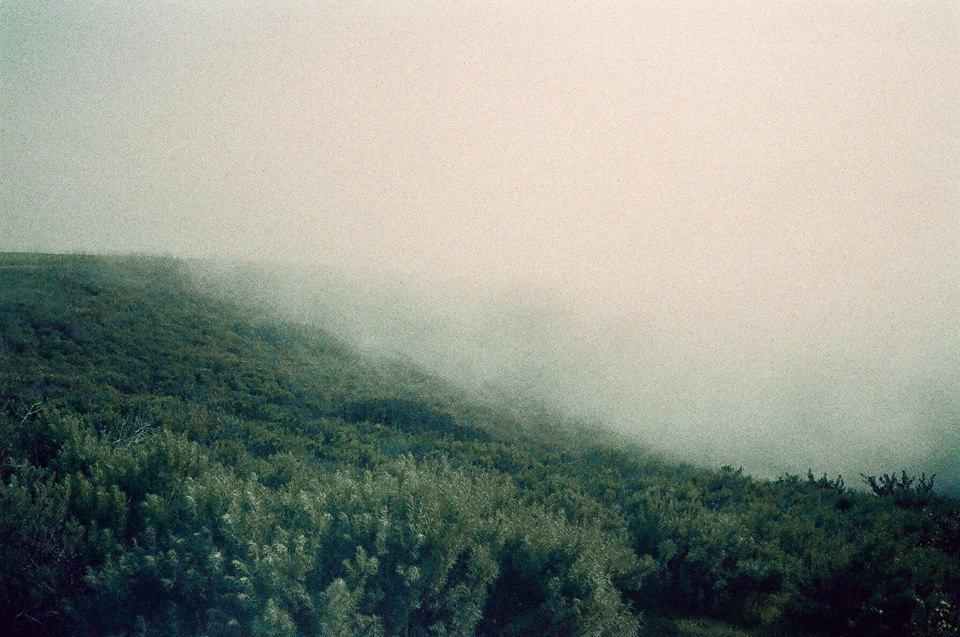 Eine neblige Waldlandschaft