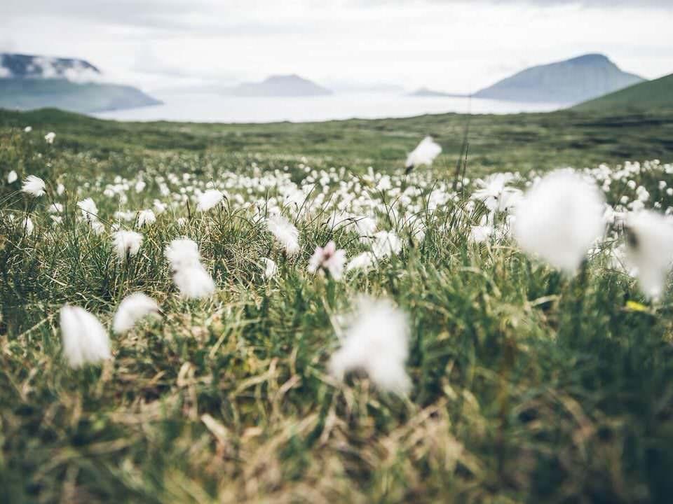 Flauschige weiße Blumen