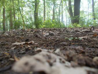 Waldboden aus der Froschperspektive