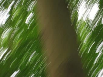 Verwackelte Ansicht eines Baumstammes mit viel grün drumherum.