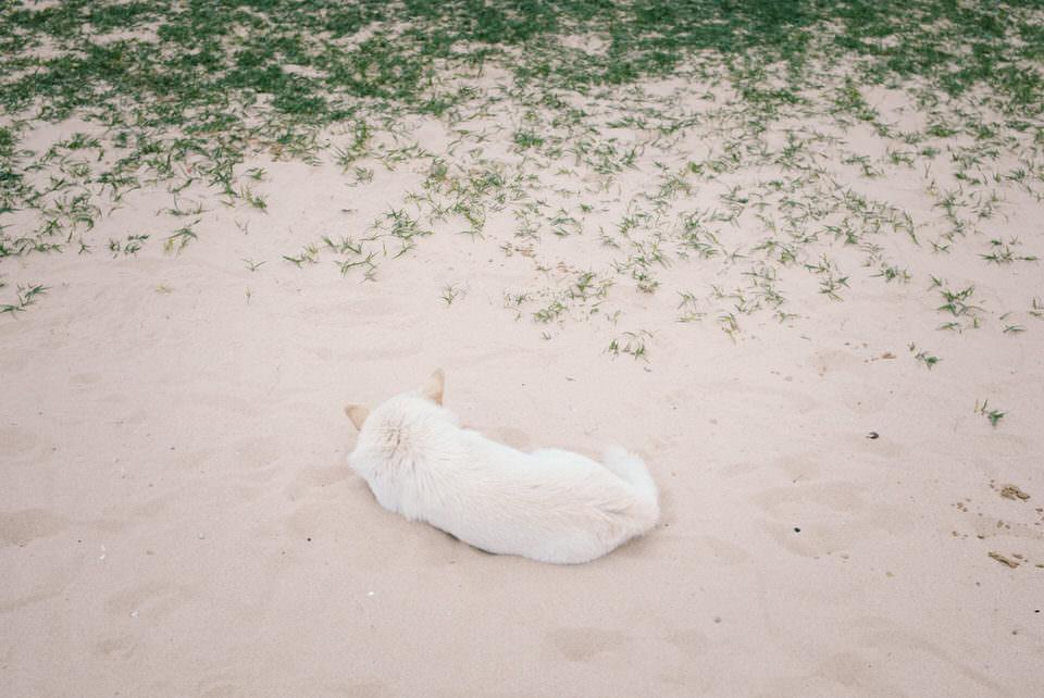 Ein Tier im Sand