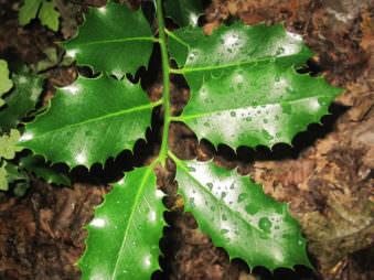 Nahaufnahme in Farbe von einem grünen Zweig.