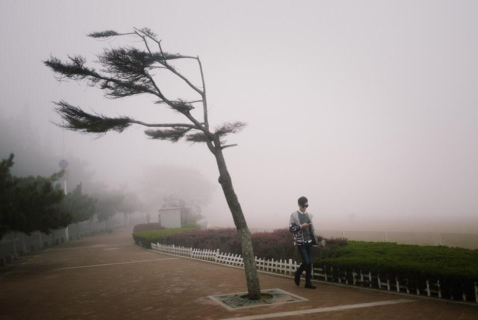 Windschiefer Baum