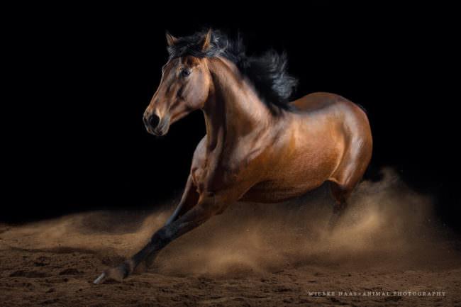 Ein Pferd im Galopp