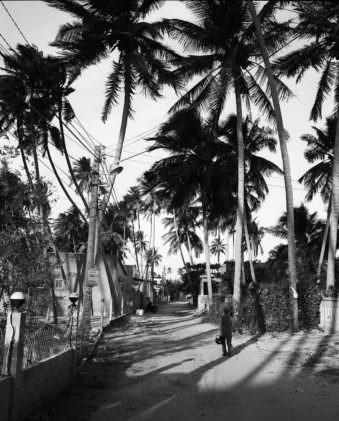 Palmen in schwarzweiß