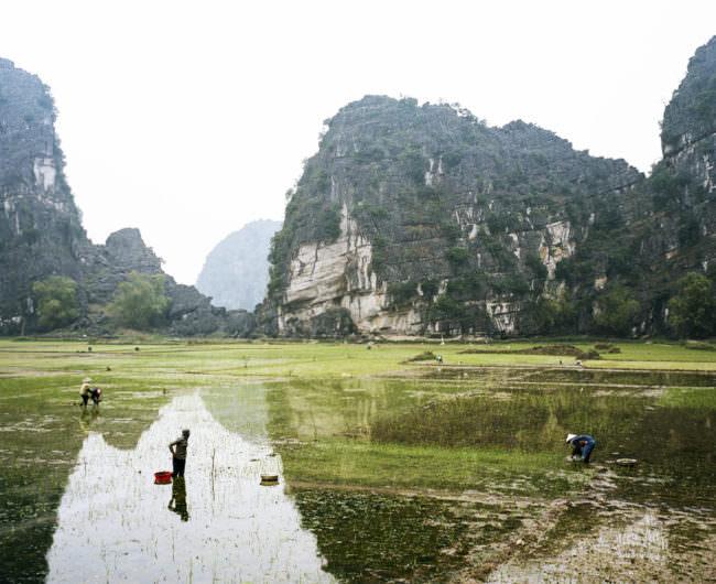 Menschen arbeiten in Reisfeldern