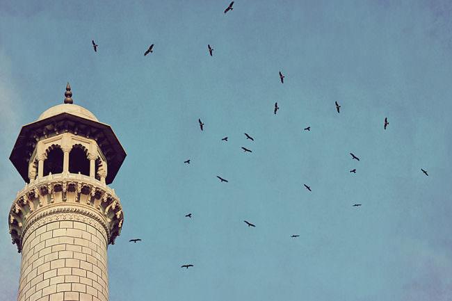 Turm mit Vögeln