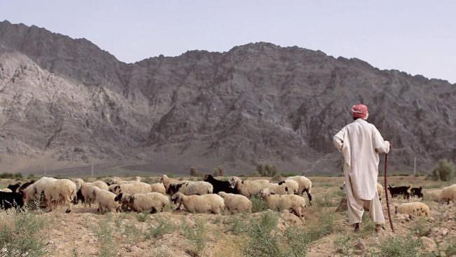 Ein hirte mit Schafen