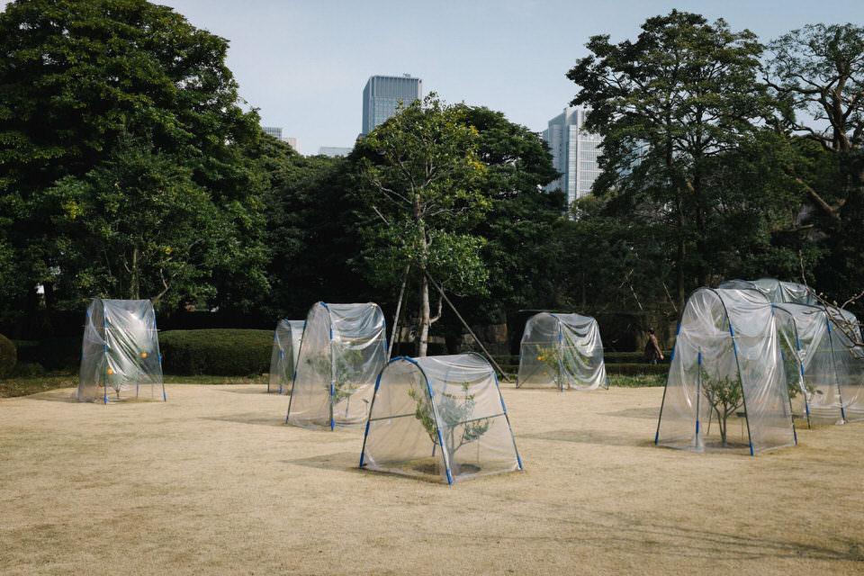 kleine Bäume in Plastik gehüllt