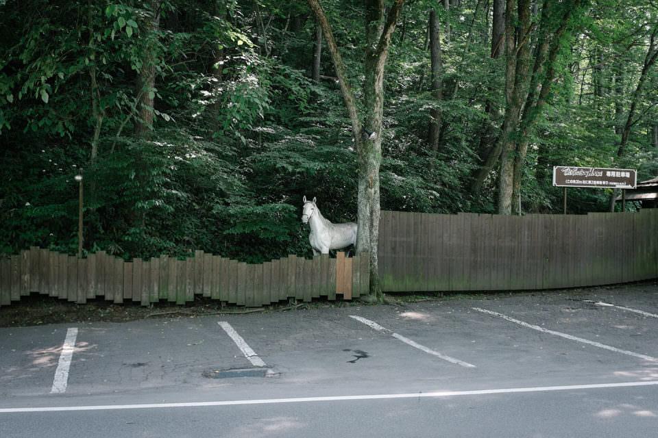 Ein Pferd hinter einem Bretterzaun