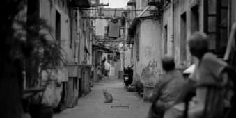 Katze sitzt in einer Gasse und sieht in die Kamera während Menschen auf sie sehen